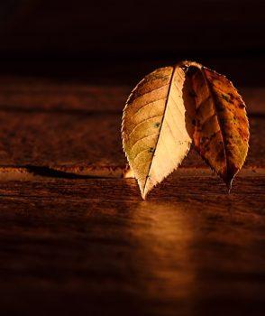 È autunno: occupiamoci dell'essenziale